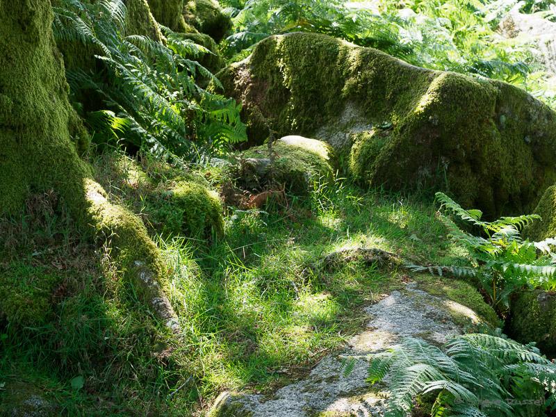 Wistman's Wood #2