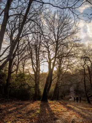 New Forest #6