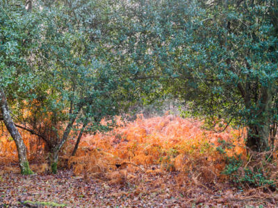 New Forest #4