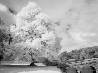 Stourhead IR #5 (720nm)